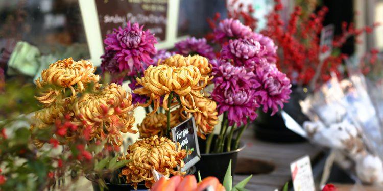 narodowy skup kwiatów